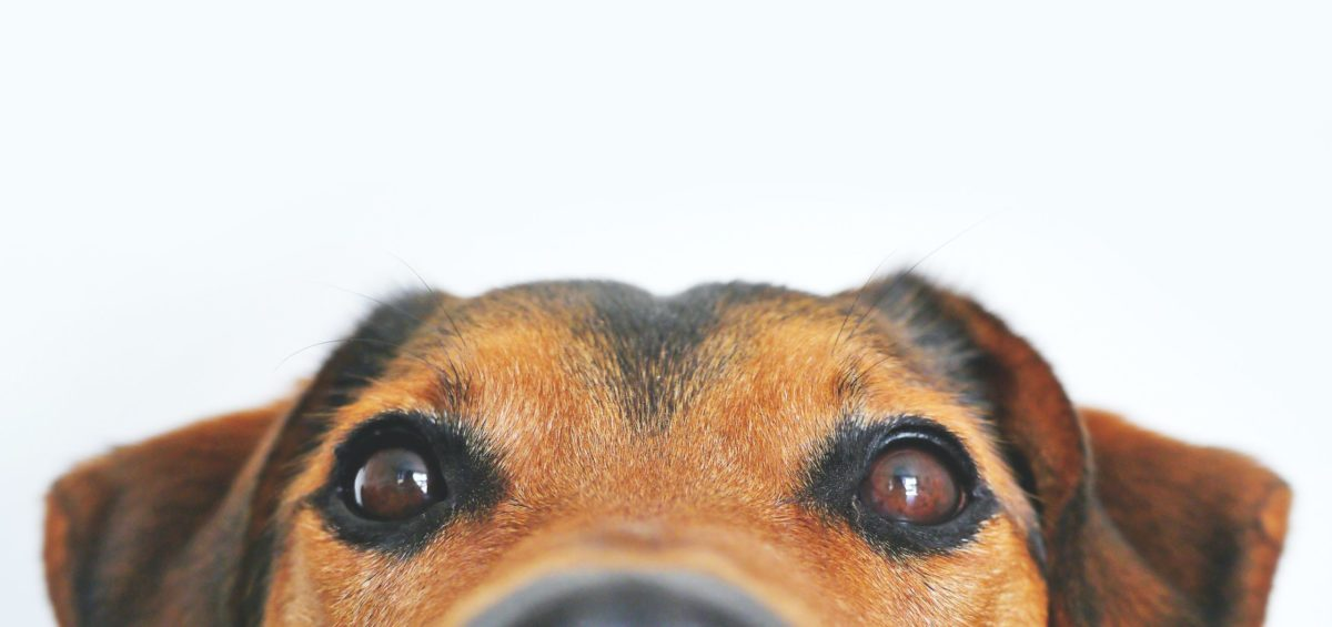 HR Won't Hire the Talking Dog - Henman Performance Group